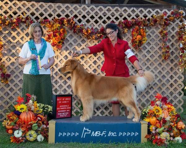 Best of Breed Ocala 2019