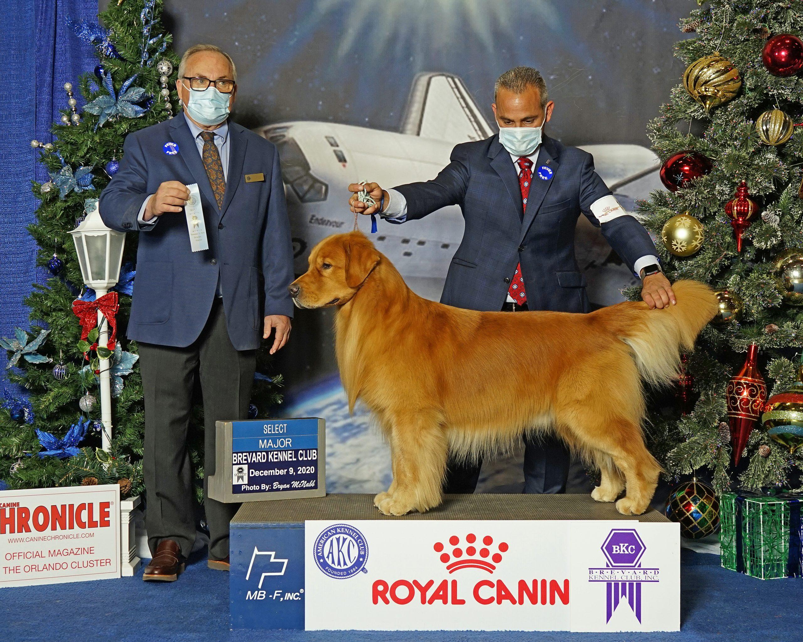 Select Dog Royal Canin 2020